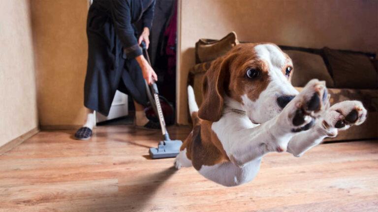 Manteniendo tu hogar libre de alergias causadas por tus mascotas