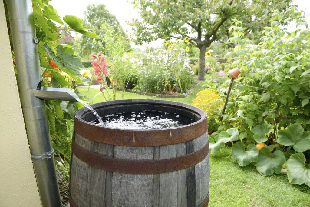barril para recoger lluvia 1